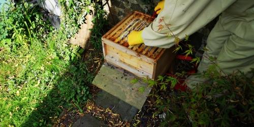Zen Beehive