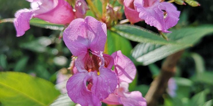 Distinctive purple flowers